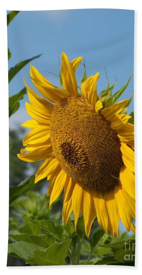 Sunflower Hand Towel featuring the photograph Growing Up by Ann Horn