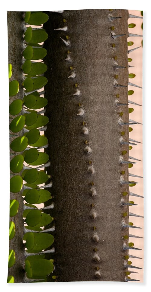 Cactus Bath Sheet featuring the photograph Growth Contrast 2 by Kelley King