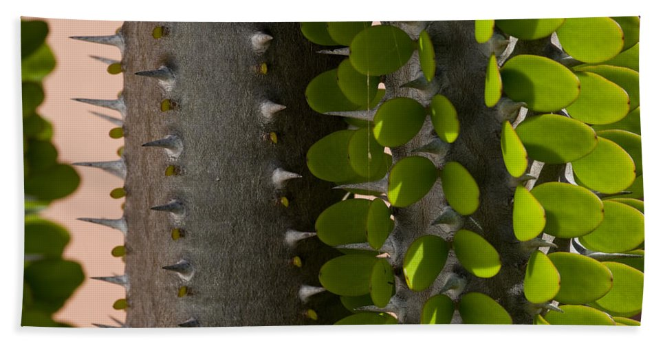 False Ocotillo Hand Towel featuring the photograph Growth Contrast by Kelley King