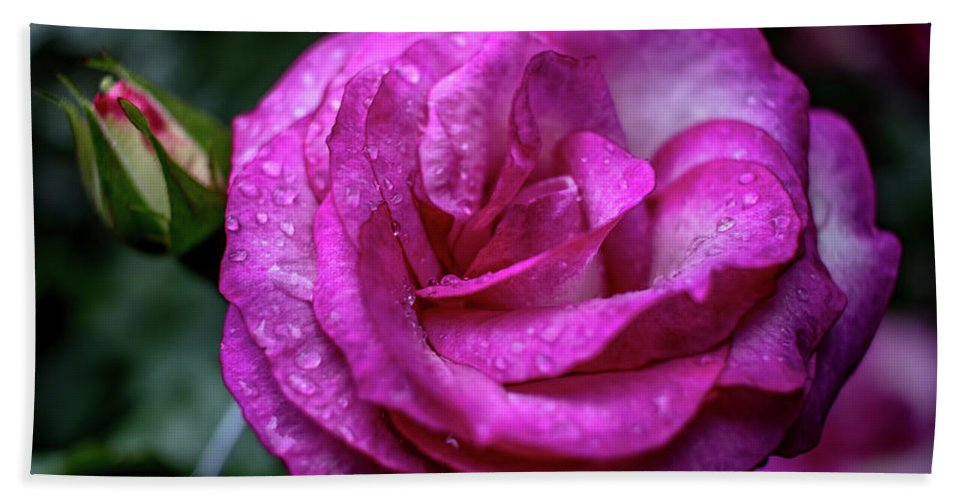 Water Drop Hand Towel featuring the photograph Budding Flower by Howard Roberts