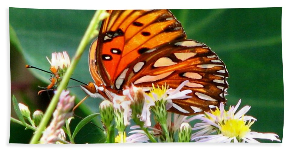 Gulf Fritillary Hand Towel featuring the photograph Gulf Fritillary 1 by J M Farris Photography