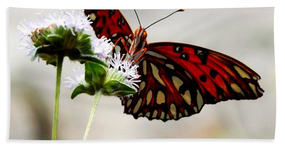 Butterfly Hand Towel featuring the photograph Gulf Fritillary Butterfly by Julie Pappas