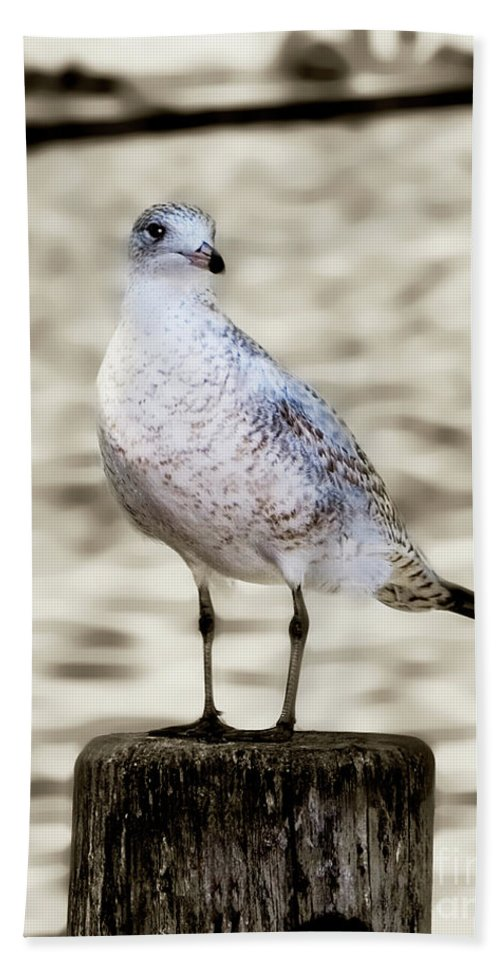 Gull Bath Sheet featuring the photograph Gull by Betty LaRue