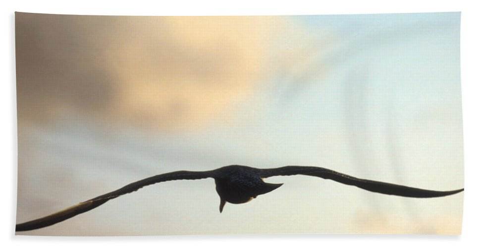 Bird Hand Towel featuring the photograph Gull by Jerry McElroy