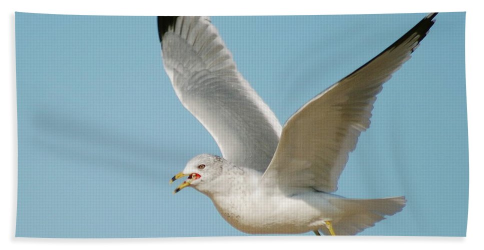 Air Hand Towel featuring the photograph Gull by Michael Peychich