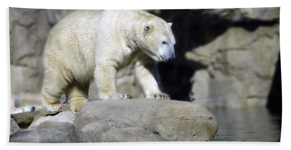 Memphis Zoo Hand Towel featuring the photograph Habitat - Memphis Zoo by D'Arcy Evans