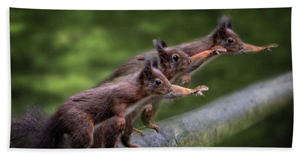Squirrels Bath Sheet featuring the photograph Hail Caesar by Ceri Jones