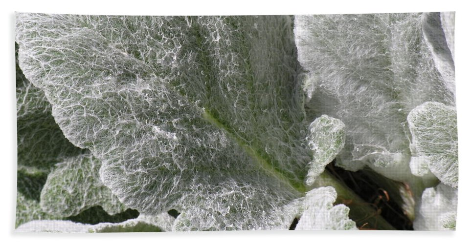 Hairy Hand Towel featuring the photograph Hairy Leaf by Diane Greco-Lesser