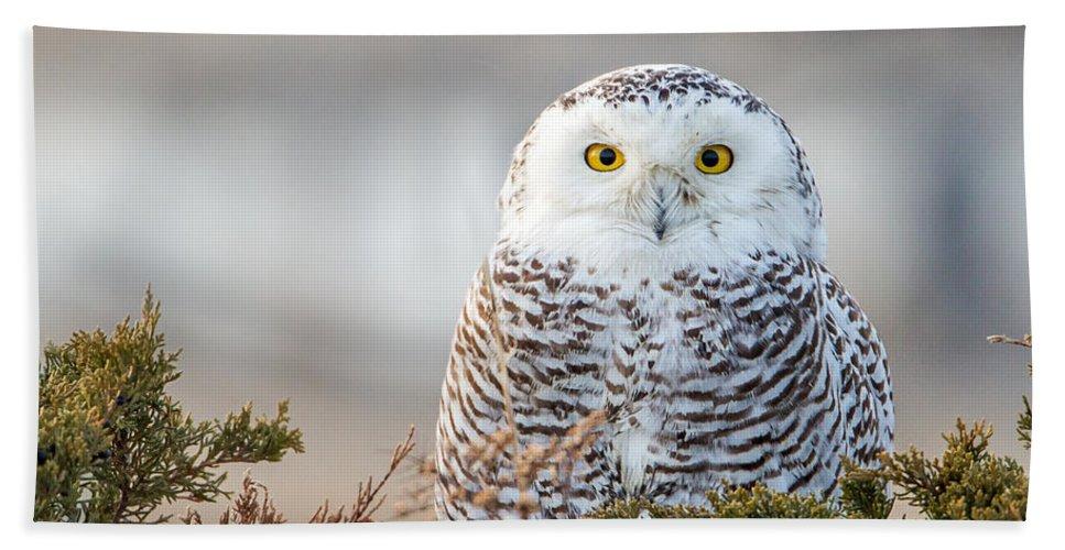 Owl Hand Towel featuring the photograph Hampton Beach Nh Snowy Owl by John Vose