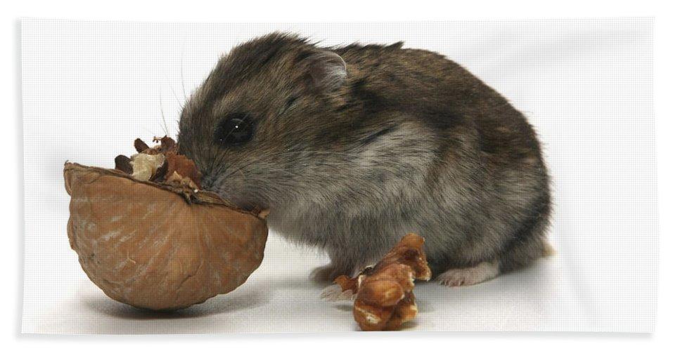 Hamster Hand Towel featuring the photograph Hamster Eating A Walnut by Yedidya yos mizrachi
