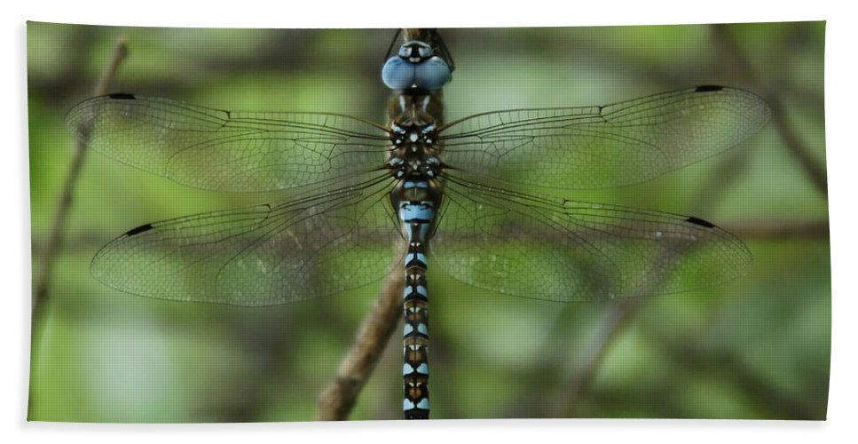 Dragon Bath Sheet featuring the photograph Hang Out by Donna Blackhall