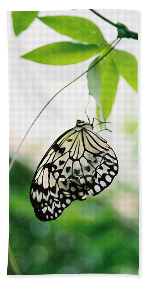 Butterfly Hand Towel featuring the photograph Hanging Butterfly by Lauri Novak