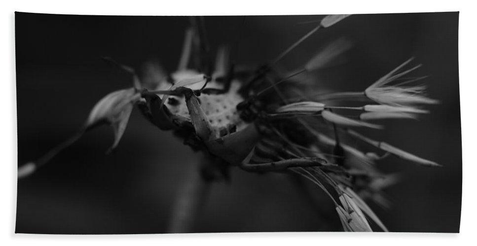 Dandelion Bath Sheet featuring the photograph Hanging On by Jessica Myscofski