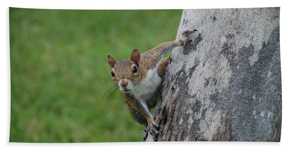 Squirrel Bath Towel featuring the photograph Hanging On by Rob Hans