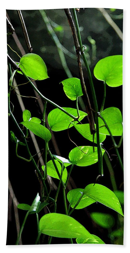 Plants Hand Towel featuring the photograph Hanging Vines by Joe Kozlowski