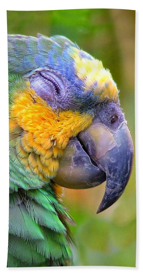 Parrot Canvas Prints Hand Towel featuring the photograph Happy 2 by Wendy McKennon