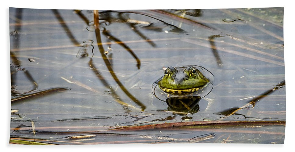 Bullfrog Bath Sheet featuring the photograph Happy As Afrog by David Kay
