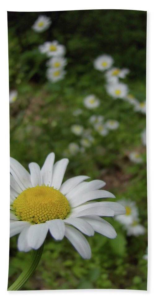 Daisy Bath Sheet featuring the photograph Happy Daisy by JAMART Photography