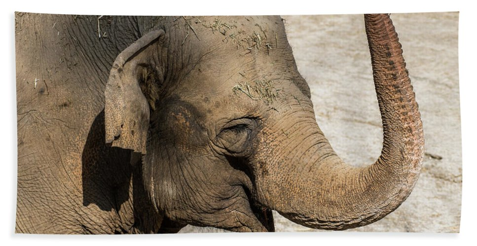 Happy Bath Sheet featuring the photograph Happy Elephant by Andrew Lelea