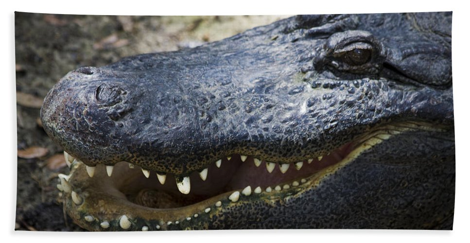 Alligator Hand Towel featuring the photograph Happy Florida Gator by Roger Wedegis