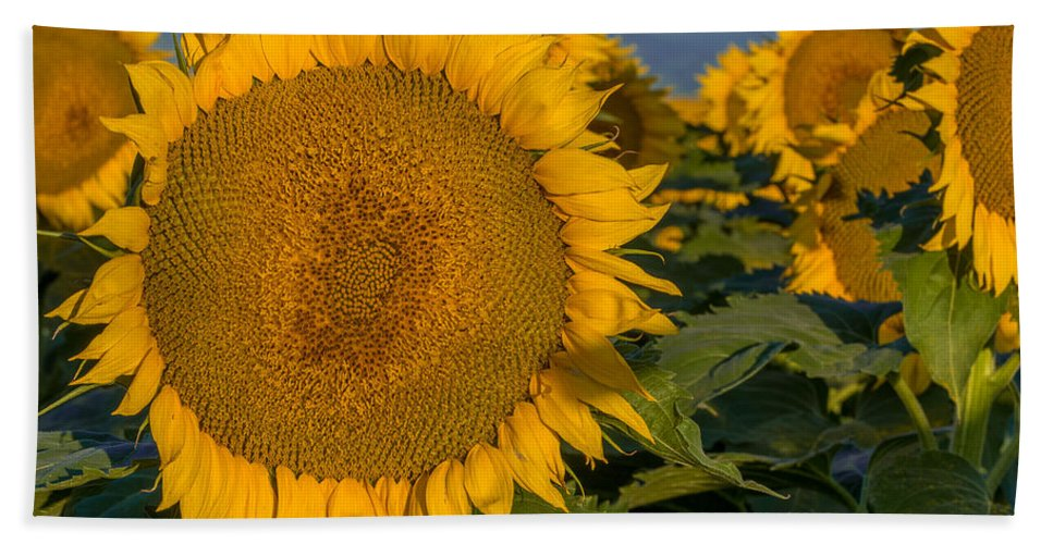 Rocky Mountains Bath Sheet featuring the photograph Happy Sunflowers by Vicki Stansbury