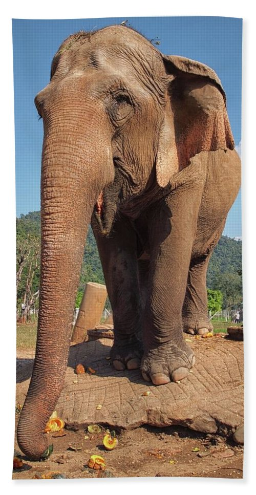 Elephant Hand Towel featuring the photograph Happy Thai Elephant In Chiang Mai by River Engel