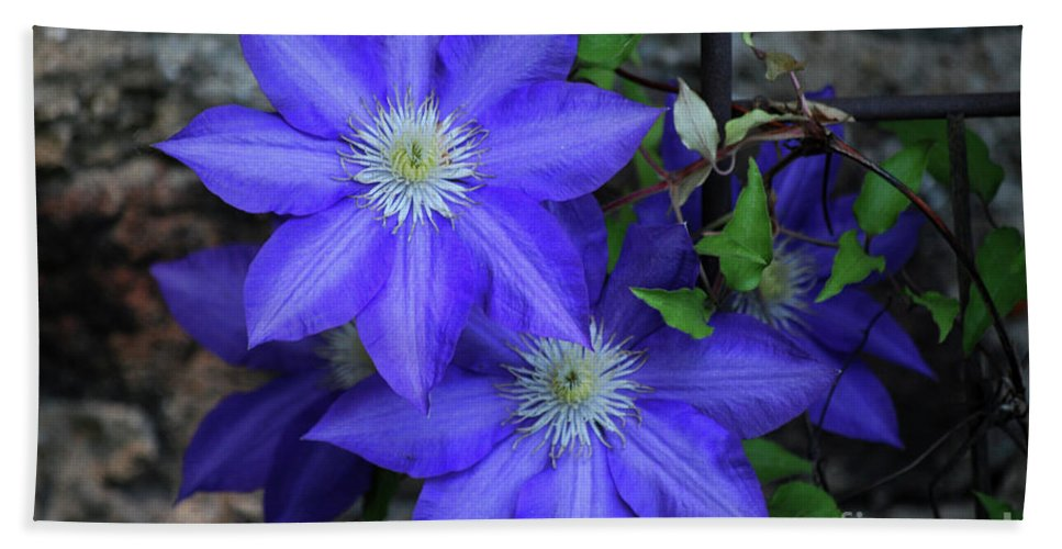 Clematis Hand Towel featuring the photograph Happy To Be Here by Lori Tambakis