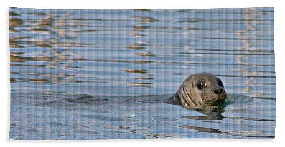 Seal Bath Towel featuring the photograph Harbor Patrol by Rick Monyahan