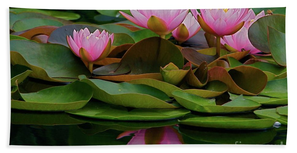 Hardy Bath Sheet featuring the photograph Hardy Pink Water Lilies by Byron Varvarigos
