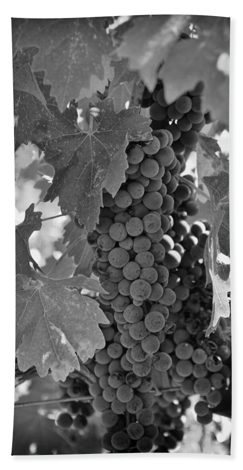 Wine Bath Sheet featuring the photograph Harvest Time by Nancy Ingersoll