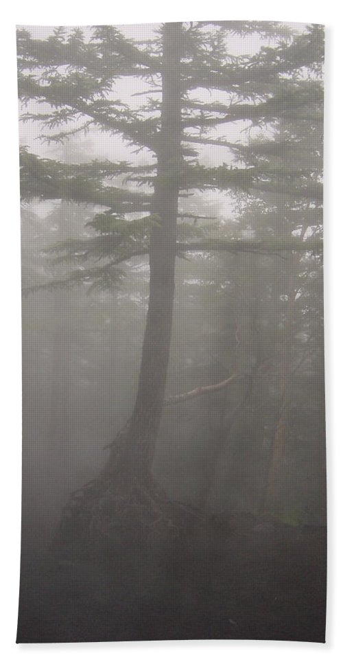 Forrest Bath Sheet featuring the photograph Haunted Forest by D Turner