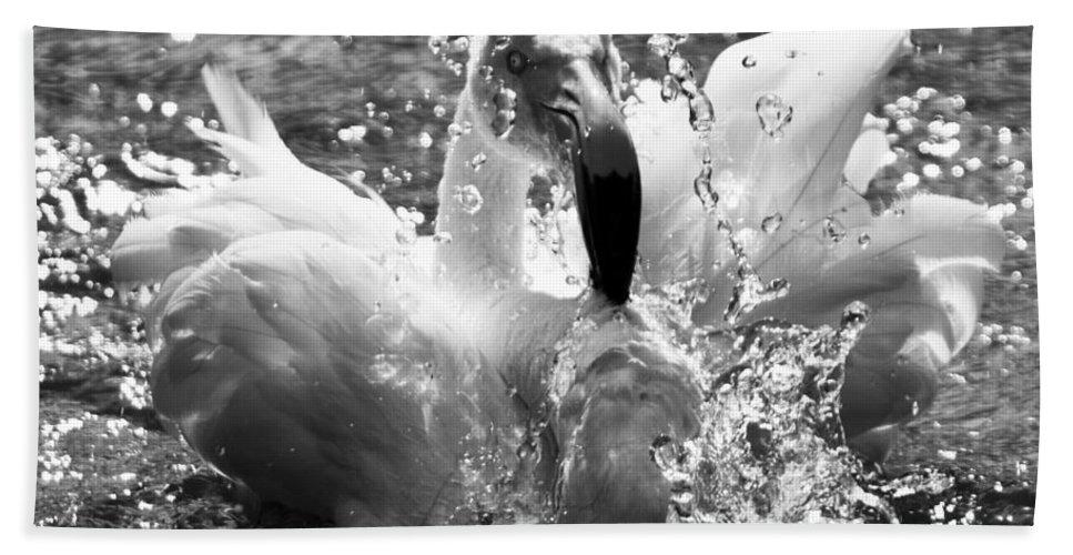 Flamingo Bath Sheet featuring the photograph Having A Bath by Angel Ciesniarska