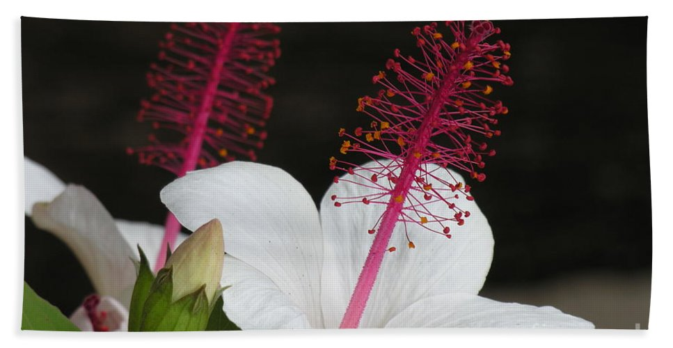 Bath Sheet featuring the photograph Hawaii Flower by Diane Greco-Lesser
