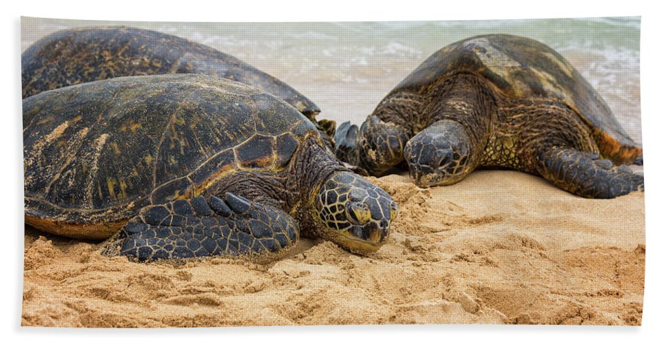 Endangered Hawaiian Green Sea Turtles Of Sea Turtle Beach Oahu Hawaii Hi Hand Towel featuring the photograph Hawaiian Green Sea Turtles 1 - Oahu Hawaii by Brian Harig