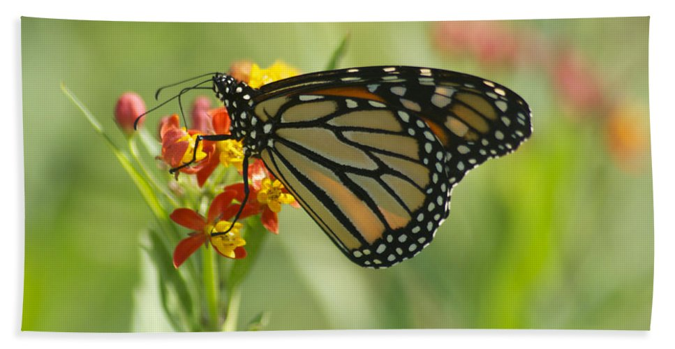Wildlife Hand Towel featuring the photograph Hawaiian Monarch 1 by Michael Peychich