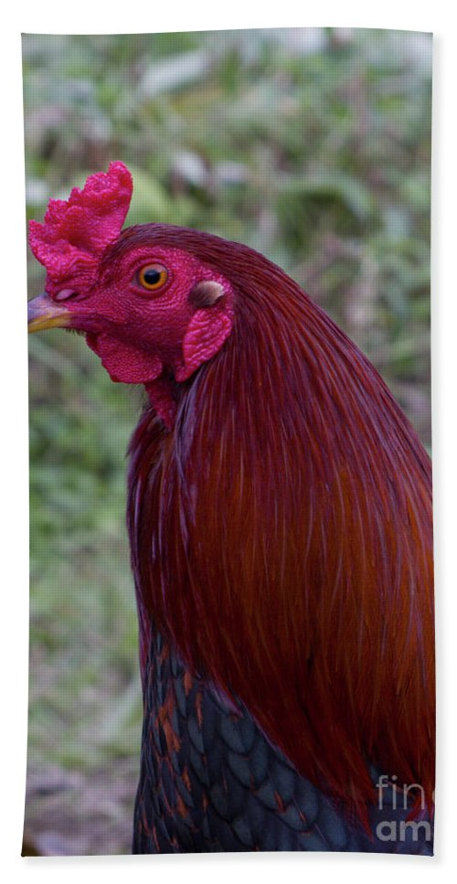 Phil Welsher Bath Sheet featuring the photograph Hawaiian Rooster by Phil Welsher
