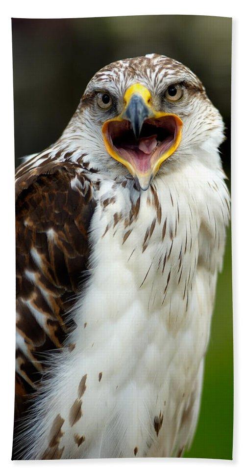 Hawk Bath Sheet featuring the photograph Hawk by Doug Gibbons