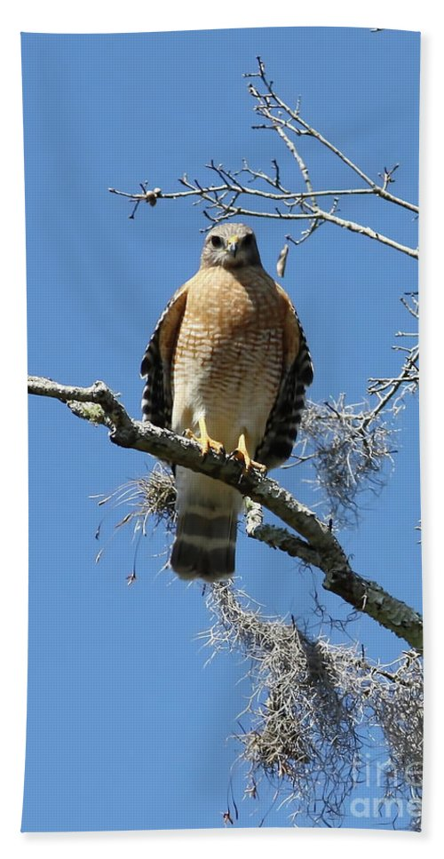 Eye Contact Hand Towel featuring the photograph Hawk Eye Contact by Carol Groenen