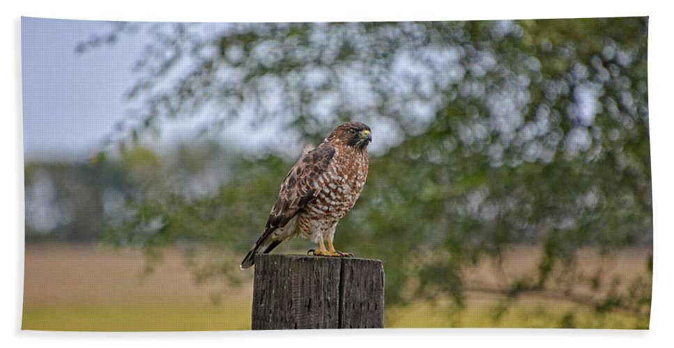 South Dakota Bath Sheet featuring the photograph Hawk On A Fence Post by M Dale