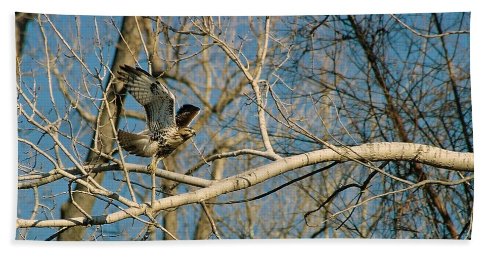Hawk Bath Towel featuring the photograph Hawk by Steve Karol