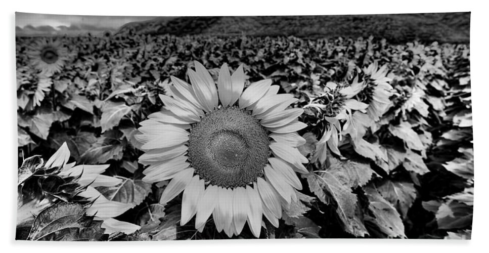 Agriculture Hand Towel featuring the photograph Hdr Sunflower Field. by W Scott McGill