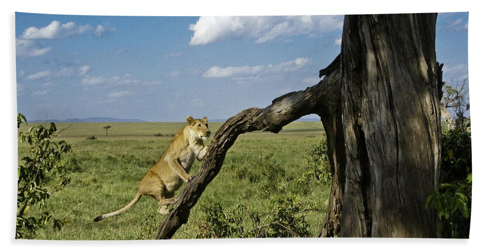 Africa Hand Towel featuring the photograph Heading For A High Spot by Michele Burgess