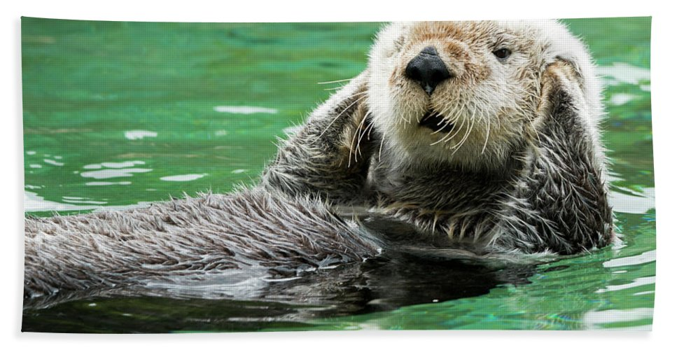 Sea Otter Hand Towel featuring the photograph Hear No Evil by Mike Dawson