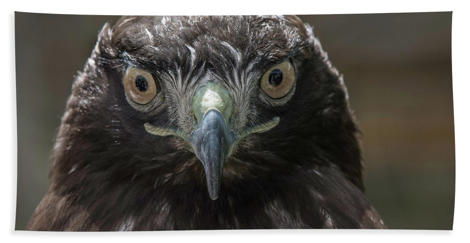 Wildlife Hand Towel featuring the photograph Hears Looking At You by Duane Deboer