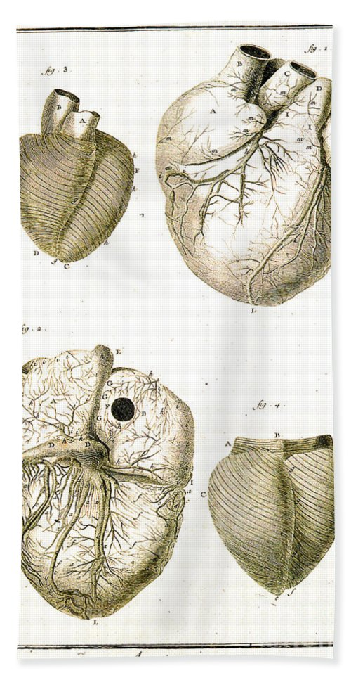 History Hand Towel featuring the photograph Heart And Muscle Fibers, 18th Century by Wellcome Images