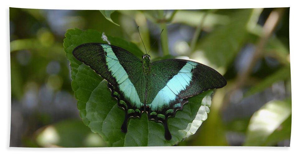 Butterfly Bath Towel featuring the photograph Heart Leaf Butterfly by David Lee Thompson