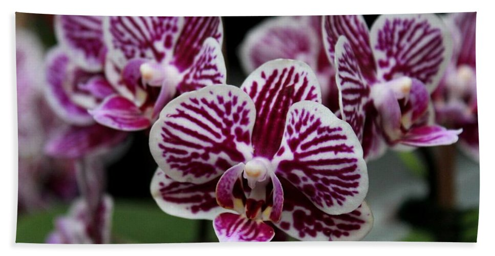Orchid Hand Towel featuring the photograph Heartbreak Smile by Michiale Schneider