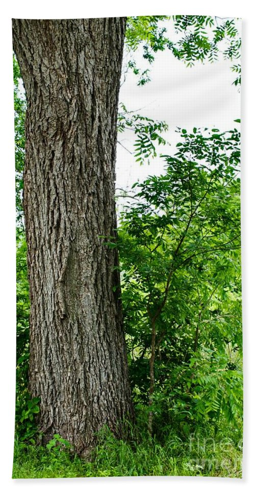 Tree Hand Towel featuring the photograph Heaven's Tree - Color Version by Gary Richards