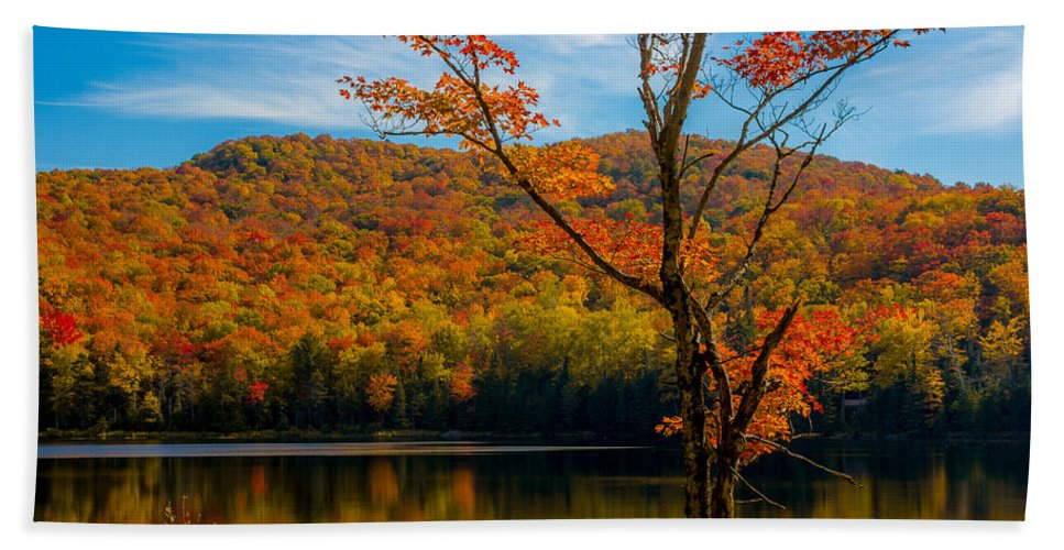 Maple Tree Bath Sheet featuring the photograph Heights Of Autumn by Tim Kirchoff