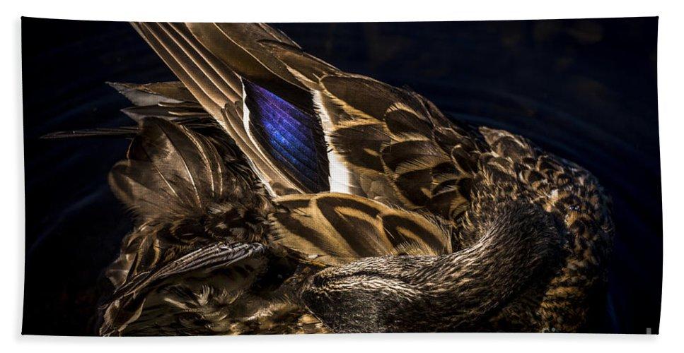 Duck Hand Towel featuring the photograph Hen Preening by David Rucker